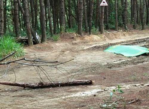 Mâu thuẫn đất đai, người đàn ông bị đâm chết ở bìa rừng - Ảnh 1
