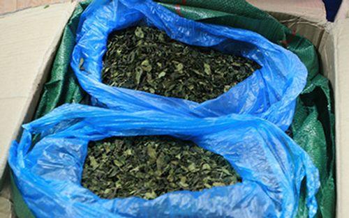 Thu giữ 82,5kg nghi lá khát - loại ma túy độc hại gấp 500 lần thuốc phiện? - Ảnh 2