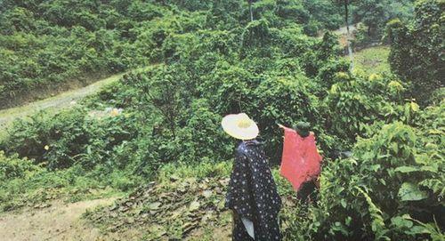 Vụ án đồng rừng và chiếc lồng gà đón sóng điện thoại - Ảnh 1