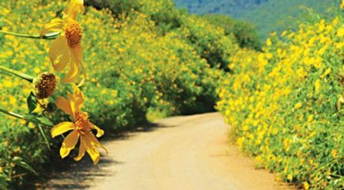Sắp đến lễ hội hoa dã quỳ: Cùng ngắm cảnh tuyệt đẹp của những cung đường ngập hoa - Ảnh 1