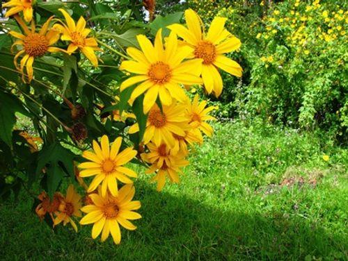 Sắp đến lễ hội hoa dã quỳ: Cùng ngắm cảnh tuyệt đẹp của những cung đường ngập hoa - Ảnh 5