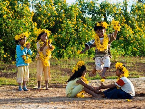 Sắp đến lễ hội hoa dã quỳ: Cùng ngắm cảnh tuyệt đẹp của những cung đường ngập hoa - Ảnh 3