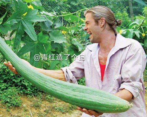 """""""Cười nghiêng ngả"""" với ảnh chế sao Hollywood thu hoạch nông sản cực bá đạo - Ảnh 2"""