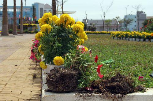 Điều tra vụ đường hoa Phú Yên bất ngờ bị phá tan hoang - Ảnh 1