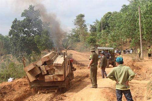 Tạm đình chỉ Giám đốc Công ty lâm nghiệp để phá rừng ở Đắk Lắk - Ảnh 1