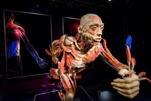 Bộ Văn hóa yêu cầu báo cáo về triển lãm cơ thể người đang gây tranh cãi - Ảnh 1