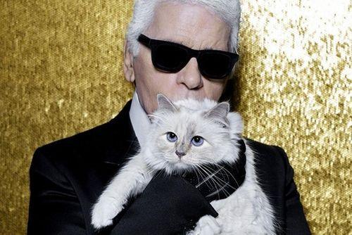 Mèo cưng của Karl Lagerfeld sẽ trở thành chú mèo giàu nhất thế giới? - Ảnh 1
