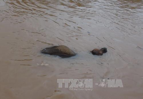 Phó Thủ tướng Trịnh Đình Dũng đến Quảng Bình chỉ đạo ứng phó lũ lụt - Ảnh 1