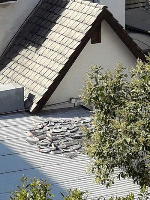 Yêu cầu báo cáo vụ phơi vây cá mập trên mái nhà thương vụ Việt ở Chile - Ảnh 2
