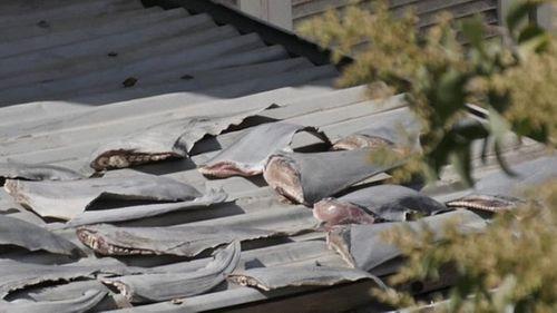 Yêu cầu báo cáo vụ phơi vây cá mập trên mái nhà thương vụ Việt ở Chile - Ảnh 1