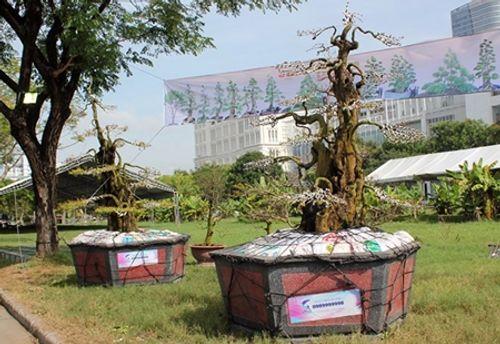 Cận cảnh cặp khế kiểng 300 tuổi rao bán giá 12 tỷ tại chợ hoa TP. Hồ Chí Minh  - Ảnh 1