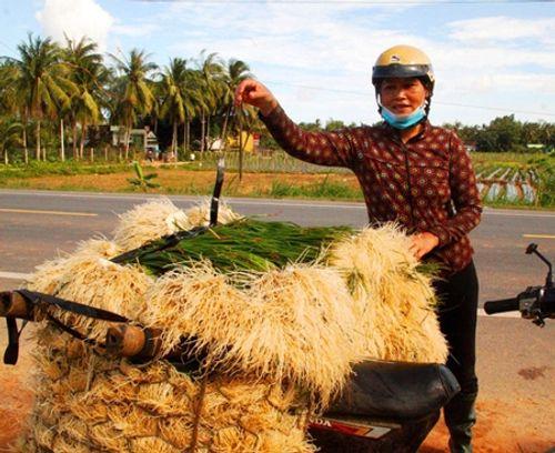 Kiệu tăng giá gấp đôi, nông dân vùng lũ Bình Định vớt vát tiền sắm Tết - Ảnh 2