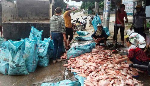 Kon Tum: Truy tìm nguyên nhân 100 tấn cá chết trên hồ thuỷ điện Plei Krông - Ảnh 1