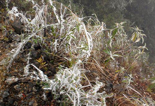Dự báo thời tiết ngày 12/1: Miền Bắc tiếp tục rét đậm, rét hại - Ảnh 1