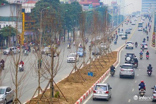 Kỳ vọng cây phong lá đỏ đem lại diện mạo mới cho Thủ đô - Ảnh 2