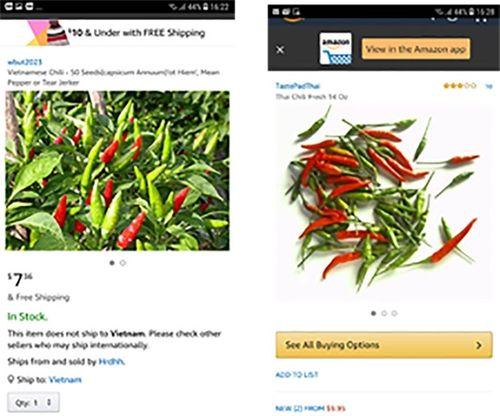 """Ớt Việt được rao bán giá """"ngất ngường"""" 670.000 đồng/kg trên Amazon - Ảnh 1"""