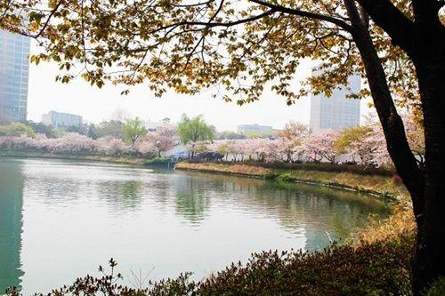 Viết những kỷ niệm Seoul – kinh đô tráng lệ của Hàn Quốc cùng Saigoncholon Tourist - Ảnh 6