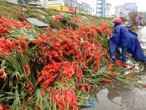 Hà Nội: Thương lái ngậm ngùi đổ cả nghìn bó hoa lay ơn chiều mùng 7 Tết - Ảnh 1