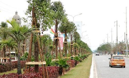 Hải Phòng trồng 1045 cây Long Não trên đường hoa phượng dài nhất Việt Nam - Ảnh 1