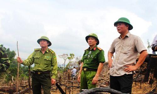 Quảng Nam: Lãnh đạo, cán bộ kiểm lâm bị kỷ luật, cách chức vì để xảy ra phá rừng - Ảnh 1