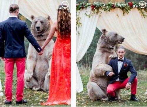 Cặp đôi nhờ gấu làm chứng trong hôn lễ - Ảnh 2