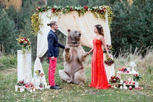 Cặp đôi nhờ gấu làm chứng trong hôn lễ - Ảnh 1