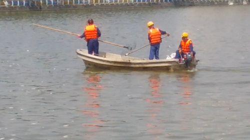 Cá chết trắng ở Hồ Tây, người dân hoang mang  - Ảnh 5