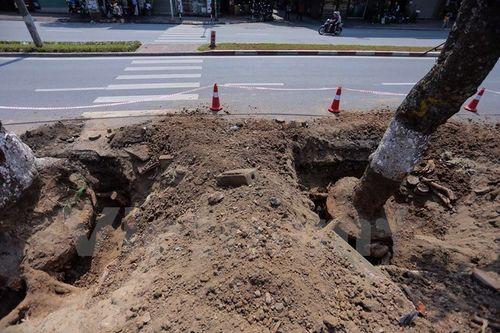 Hà Nội: Hàng cây cổ thụ phố Kim Mã được di dời khỏi nội đô - Ảnh 2