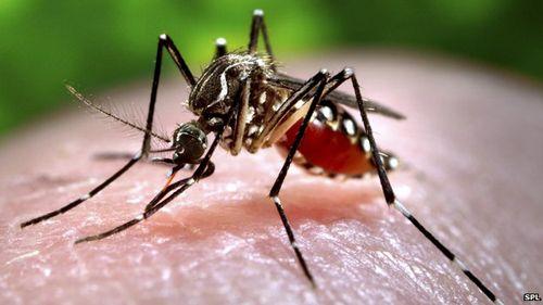 Phát hiện muỗi tại Việt Nam nhiễm vi rút Zika - Ảnh 1