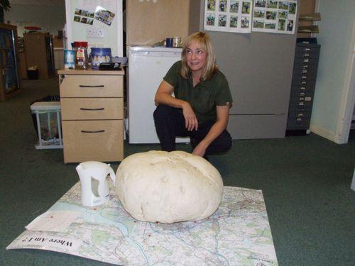 Phát hiện nấm khổng lồ nặng 10kg - Ảnh 2