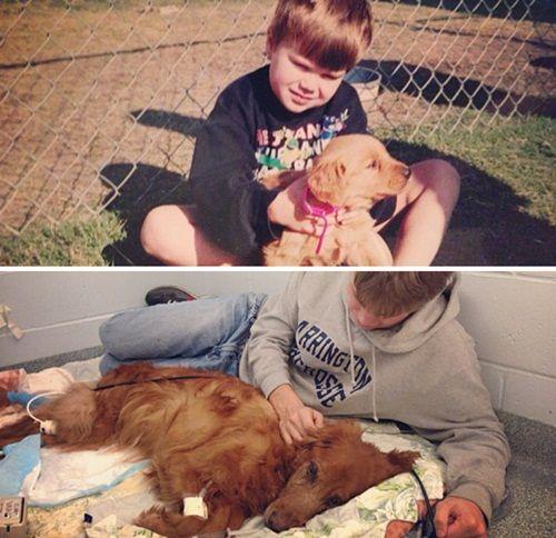 Cảm động chùm ảnh những chú chó và chủ cùng nhau lớn lên - Ảnh 5