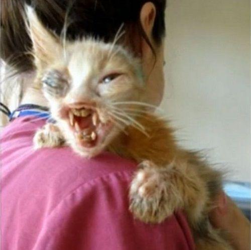 """Ngạc nhiên xem quá trình """"lột xác"""" của chú mèo 'xấu xí' nhờ phẫu thuật thẩm mỹ - Ảnh 2"""