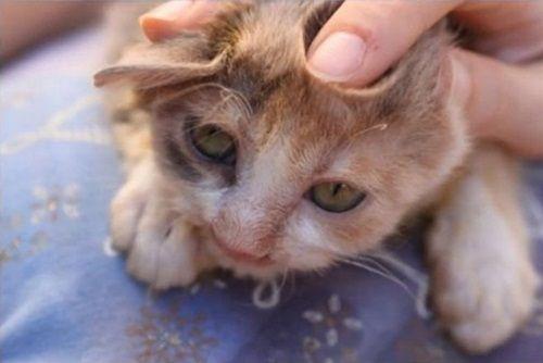 """Ngạc nhiên xem quá trình """"lột xác"""" của chú mèo 'xấu xí' nhờ phẫu thuật thẩm mỹ - Ảnh 5"""