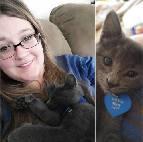 Chỉ với một chú mèo, chàng trai đã cầu hôn thành công bạn gái - Ảnh 1