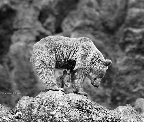 Học hỏi được gì từ cách dạy con của loài gấu - Ảnh 12