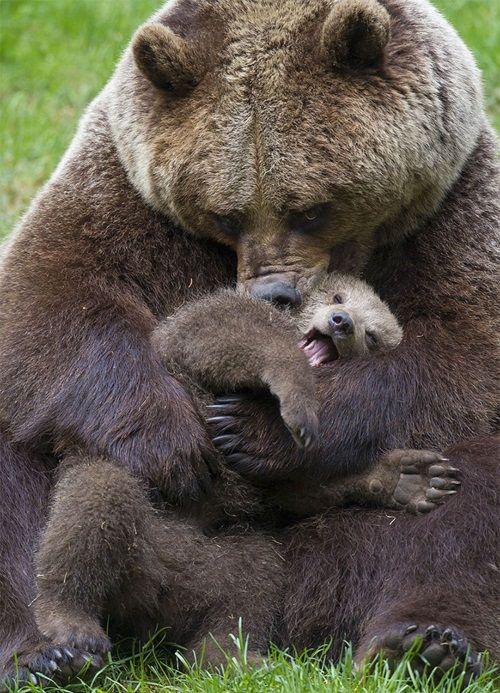 Học hỏi được gì từ cách dạy con của loài gấu - Ảnh 2