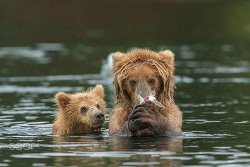 Học hỏi được gì từ cách dạy con của loài gấu - Ảnh 4