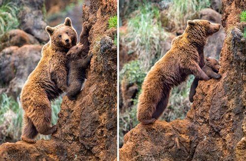 Học hỏi được gì từ cách dạy con của loài gấu - Ảnh 7