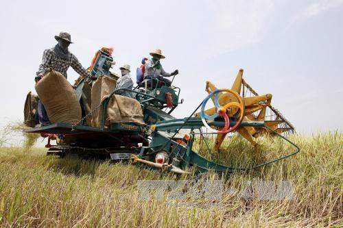 Thái Lan nỗ lực ổn định thị trường lúa gạo - Ảnh 1