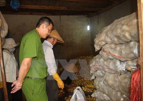 Biến rau củ Trung Quốc thành hàng Đà Lạt, một cơ sở bị đình chỉ - Ảnh 1