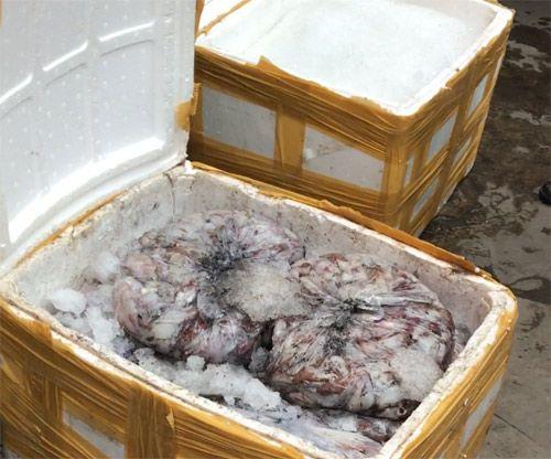 """Tiếp tục phát hiện hơn 1 tấn hải sản """"bốc mùi"""" ở Bình Dương - Ảnh 1"""