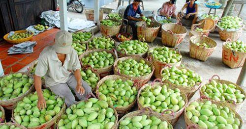 Trung Quốc nhập khẩu khoảng 70% rau quả của Việt Nam - Ảnh 1
