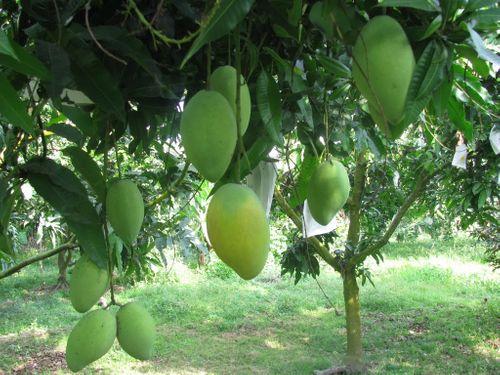 Trái cây Tết Nguyên đán sẽ khan hàng - Ảnh 1