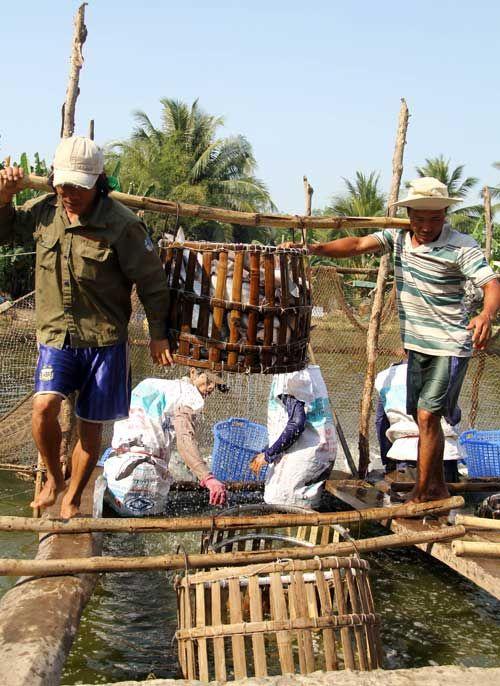 Kiểu thu mua cá, tôm lạ đời của thương lái Trung Quốc - Ảnh 1