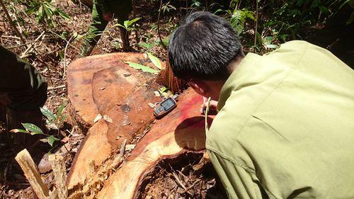 """Những vụ án phá rừng rúng động Tây Nguyên trước khi trùm lâm tặc Phượng """"râu"""" bị bắt - Ảnh 2"""