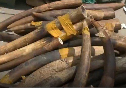 Phát hiện hơn 300kg ngà voi ở sân bay Nội Bài - Ảnh 1