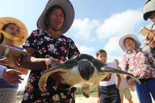 Đồi mồi quý hiếm mắc lưới ngư dân Quảng Nam - Ảnh 1