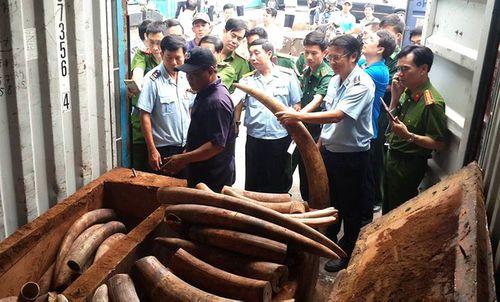 Liên tục bắt nhiều vụ nhập ngà voi từ châu Phi về cảng Cát Lái - Ảnh 1