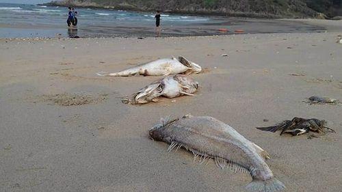 """Khởi kiện Formosa: Không có """"nguyên đơn"""" là ngư dân Hà Tĩnh - Ảnh 1"""