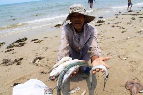 Ngư dân miền Trung khởi kiện Formosa - Ảnh 1